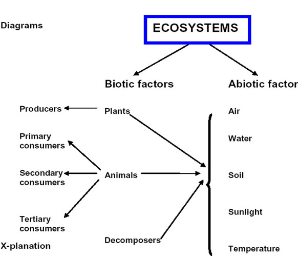 ETA Teaching Some Selected Topics of Grade 9 Physics – Abiotic and Biotic Factors Worksheet